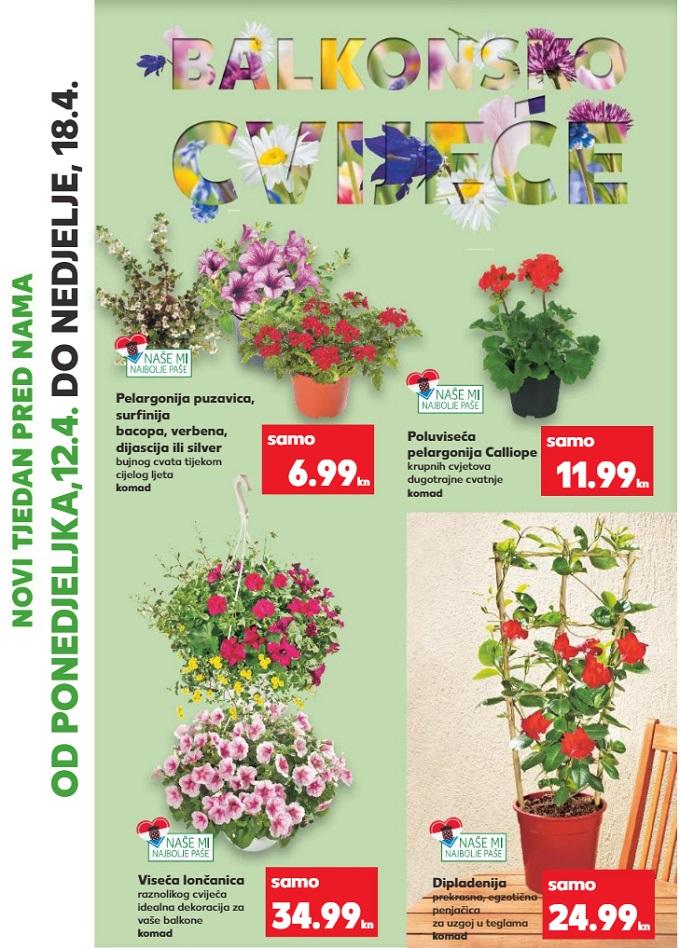 Kaufland akcija balkonsko cvijeće